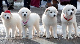 Santa Paws 2: The Santa Pups (2012)