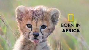 Born in Africa (2020)