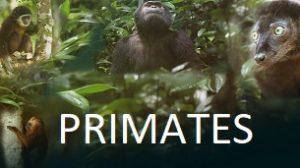 Primates (2020)