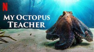 My Octopus Teacher (2020)